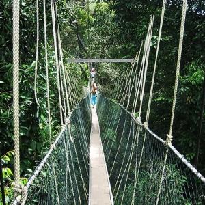 Taman-Negara-Canopy-Walk-Flickr_nimbu